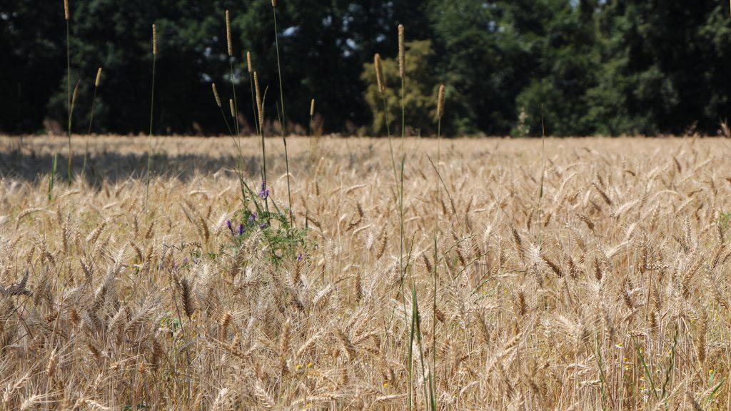 Landwirtschaft_2427